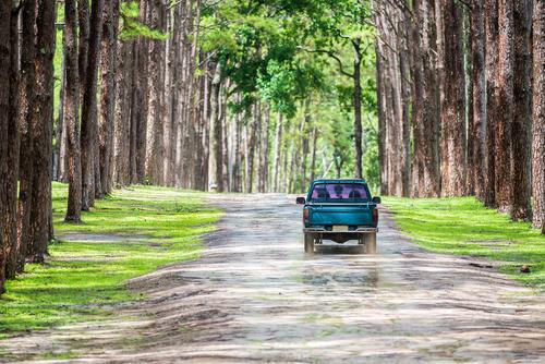 pickup truck gravel road pine forest
